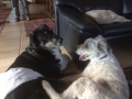 Wilma mit Max(Paul) D Januar 19 (2)