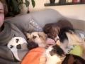 Marlie mit Lucky und Katze D Januar 19