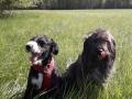 Codrin & Tilla D April 20