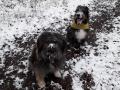 Codri & Grace(Tilla) D Februar 21