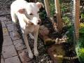 Lemmi(Lucy) D November 20 (1)