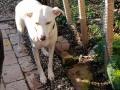 Lemmi(Lucy) D November 20 (2)