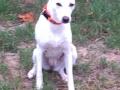 Lemmi(Lucy) D November 20