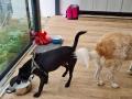 Holly mit Nino D September 21 (1)