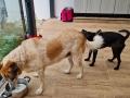 Holly mit Nino D September 21 (2)