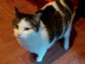 Katze 29_12_20 (2)